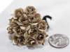 Paper Roses - Champagne 144/pk