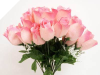 Velvet Rose Buds - Pink 1-bunch