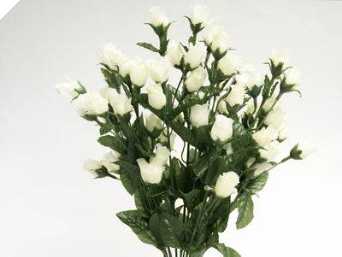 Mini Rose Buds - Cream 1-bunch