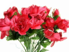 Silk Open Rose - Burgundy 1-bunch