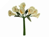 Calla Lily-Ivory, singles x 12