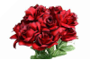 Velvet Bloom Roses - Black Red  1-bunch