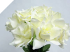 Velvet Bloom Roses - Cream 1-bunch