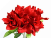 Velvet Bloom Roses - Red 1-bunch